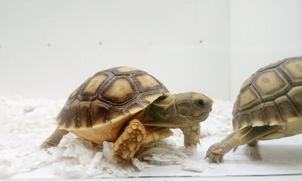 retour-animal-expo-tortue