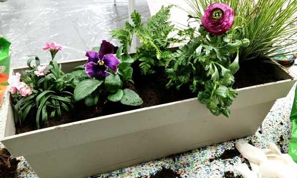 fleurs-plantes-hiver