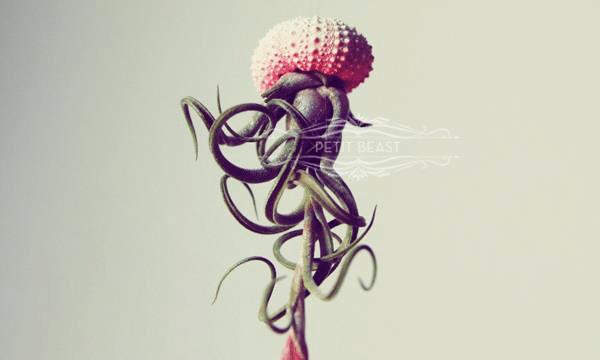 plantes-méduses
