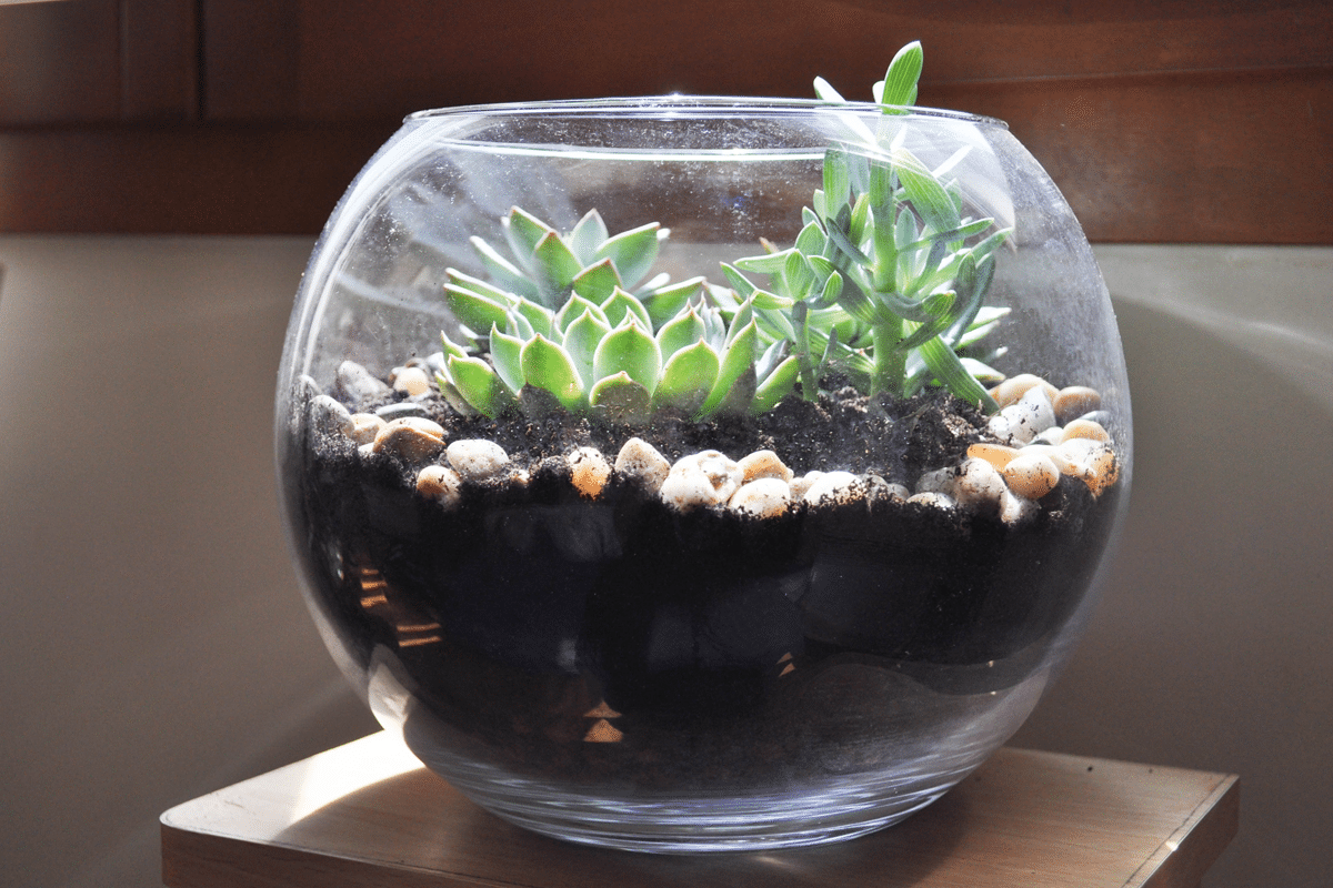diy faire son terrarium de plantes. Black Bedroom Furniture Sets. Home Design Ideas