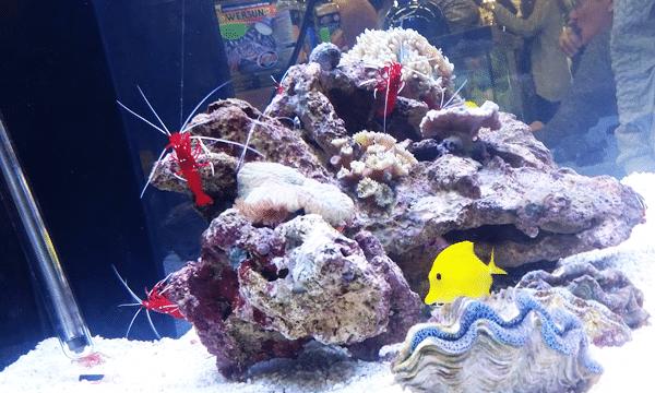 aquarium-animalexpo