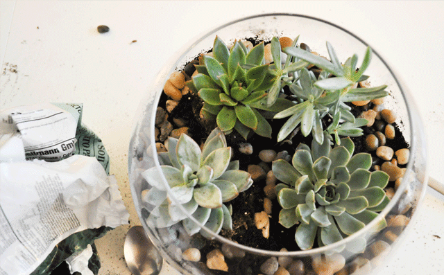 DIY-Terrarium