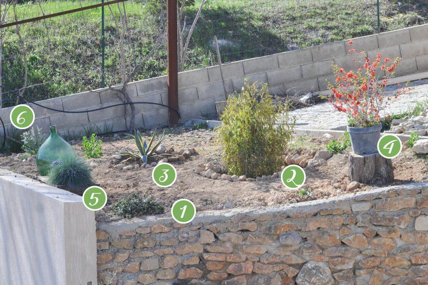 jardin-méditerranéen-plantes