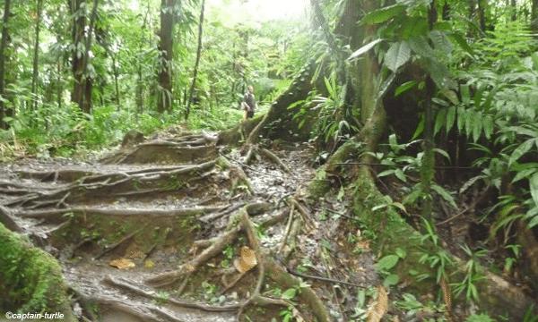 promenade-foret-gwada